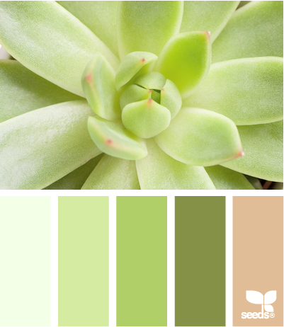 #colorpalette I love this collection of greens with just a touch of soft pink called succulent glow from Design Seeds. This is a fresh unique palette for a little girl.