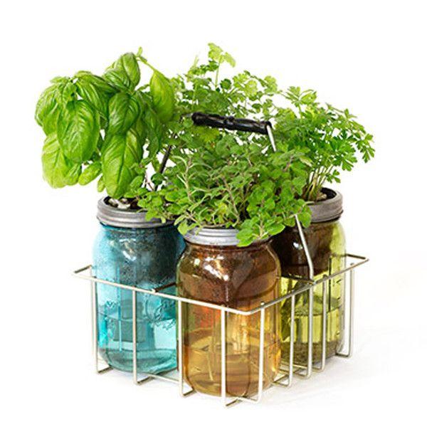 Self Watering Herbal Garden Jar Kits Hydroponics System Hydroponics And Gardens