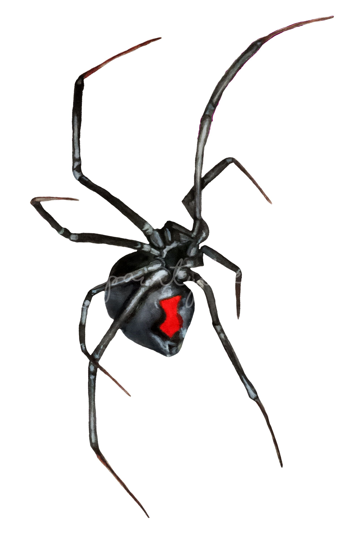 Black Widow Spider Watercolor Halloween Gothic Clipart Clip Art Digital Clip Art Watercolor