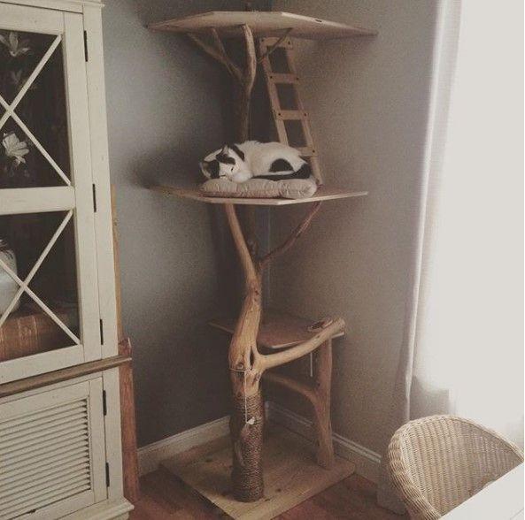 Photo of ¿Cómo creo una interesante publicación de rascado DIY? – Diy árbol de gato – #Cat #DIY # …