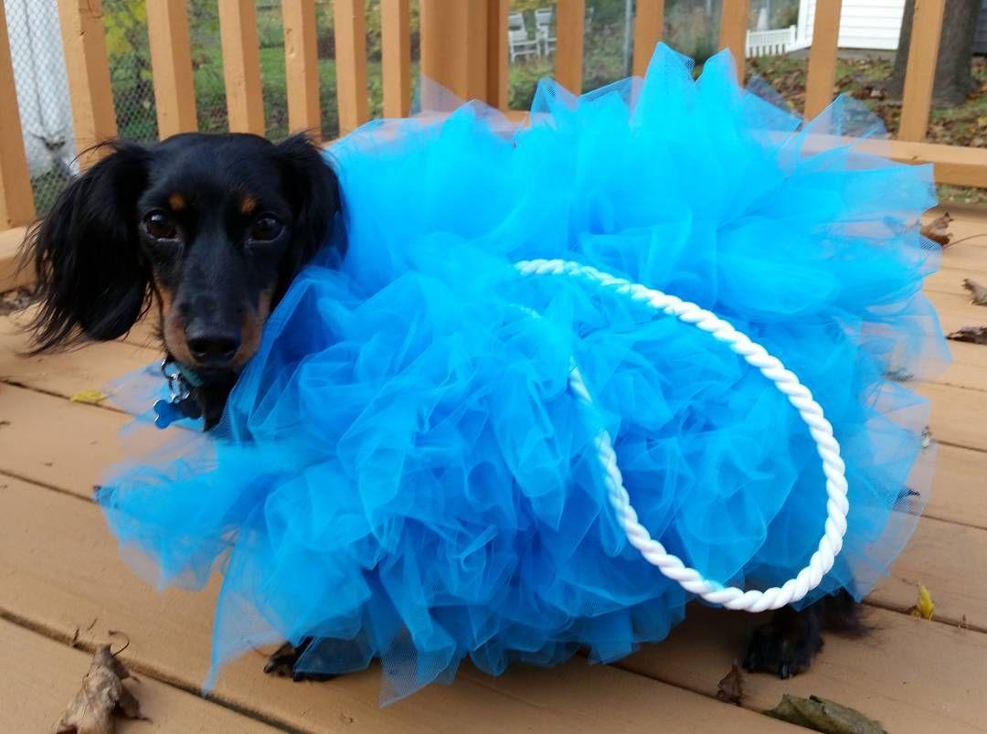 Diy Dog Costume Ideas Diy Dog Costumes Dog Halloween Costumes