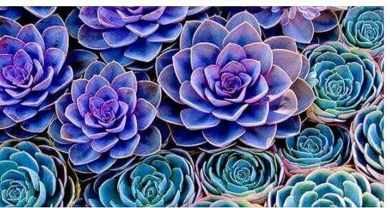 Succulents wallpaper Succulents, Succulents wallpaper