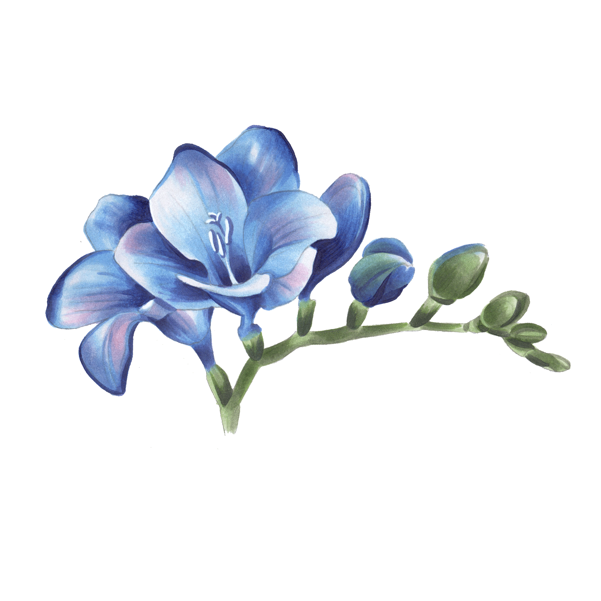 517911bbb Freesia- March flower | Tattoos | Forearm flower tattoo, Flower ...