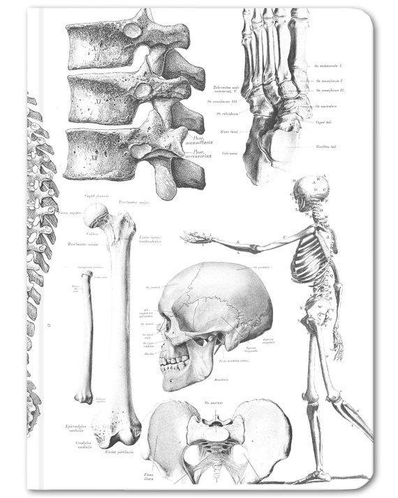 Skeleton Mini Hardcover Notebook Anatomy Journal Field Notes Dot