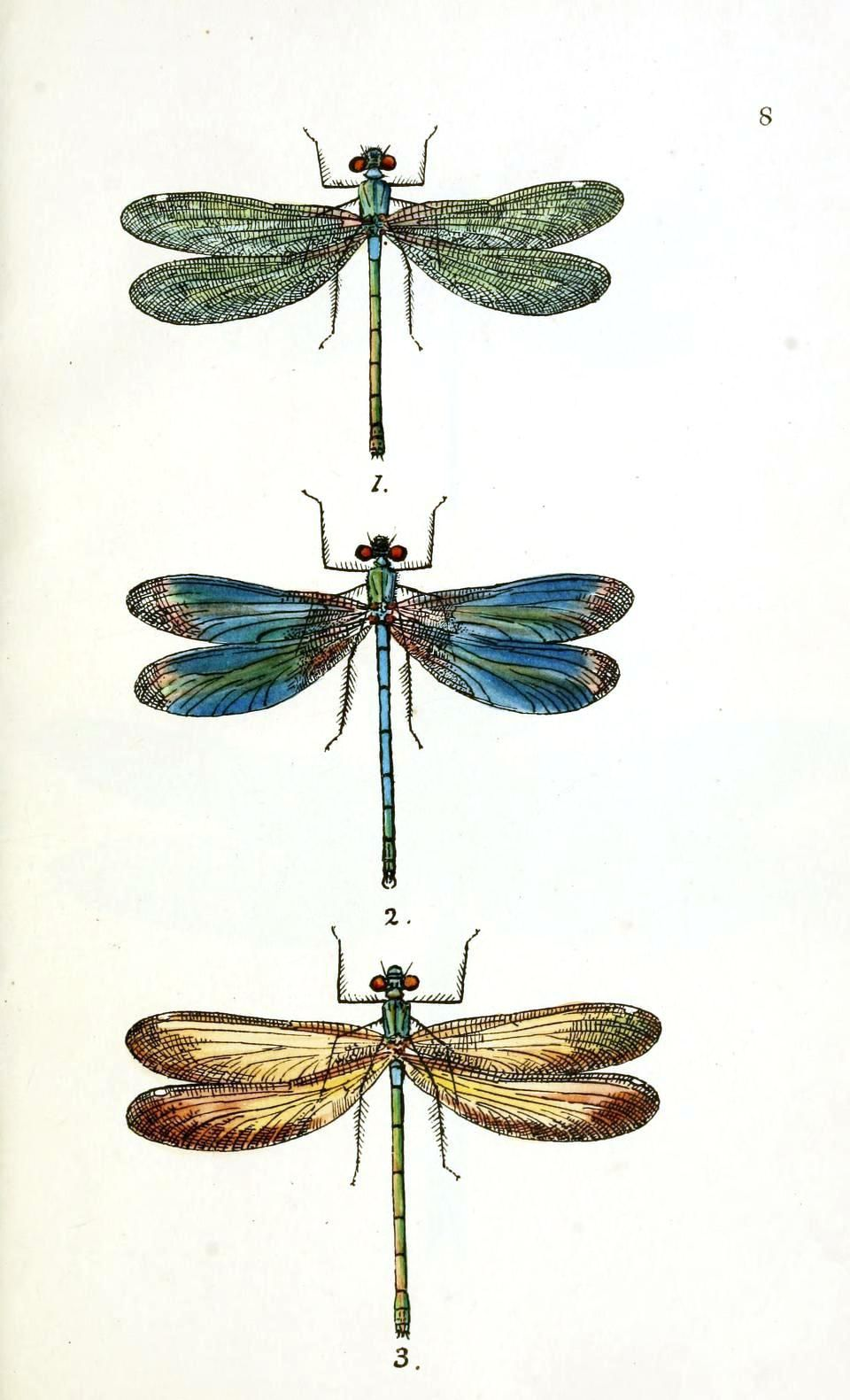 Dragonflies Wall Decor Dragonfly Art Print Antique Prints Nature Print Vintage Prints