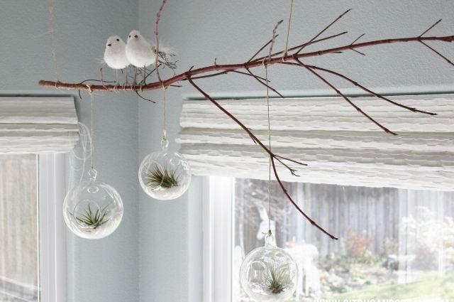 Deko Ast Zum Aufhängen luftpflanzen ideen deko kugel terrarien zweig aufgehängt for the