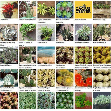 California Cactus Center 216 South Rosemead Blvd Pasadena 91107