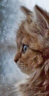 Photo of Katzen Hintergrund Iphone Kitty 23+ Beste Ideen #Katzen Tier Hintergrund iPhone Katzen …