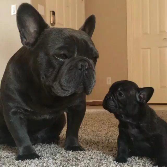labradorpuppies Hashtag • Instagram Posts, Videos
