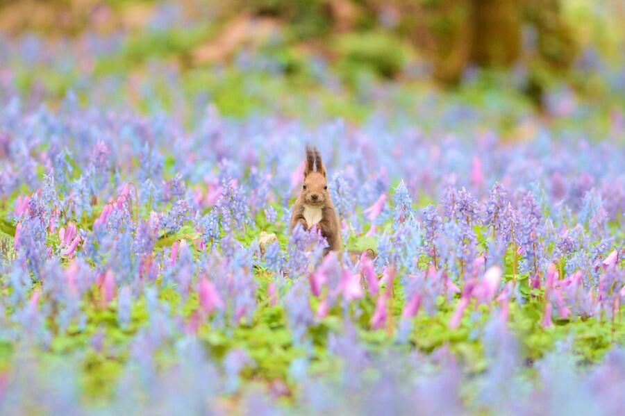 Animal Photography : From a flower garden to hello ♬ by ChiakiFujino #animals #wildlife pic.twitter.com/SIt11CLD1n