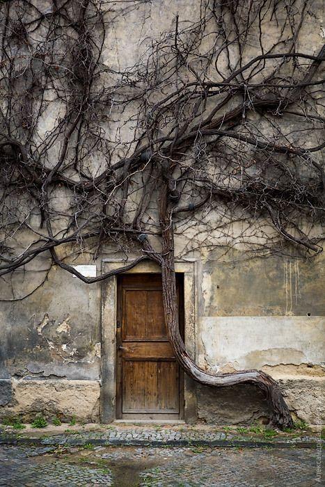 Tree Rooted Door…