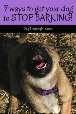 How To Stop Do Barking Learn The Real Reason Your Dog Barks Plus 9 Tips On How To Get Your Dog To Stop Barking Now Stop Dog Barking Dog Training Dog Barking