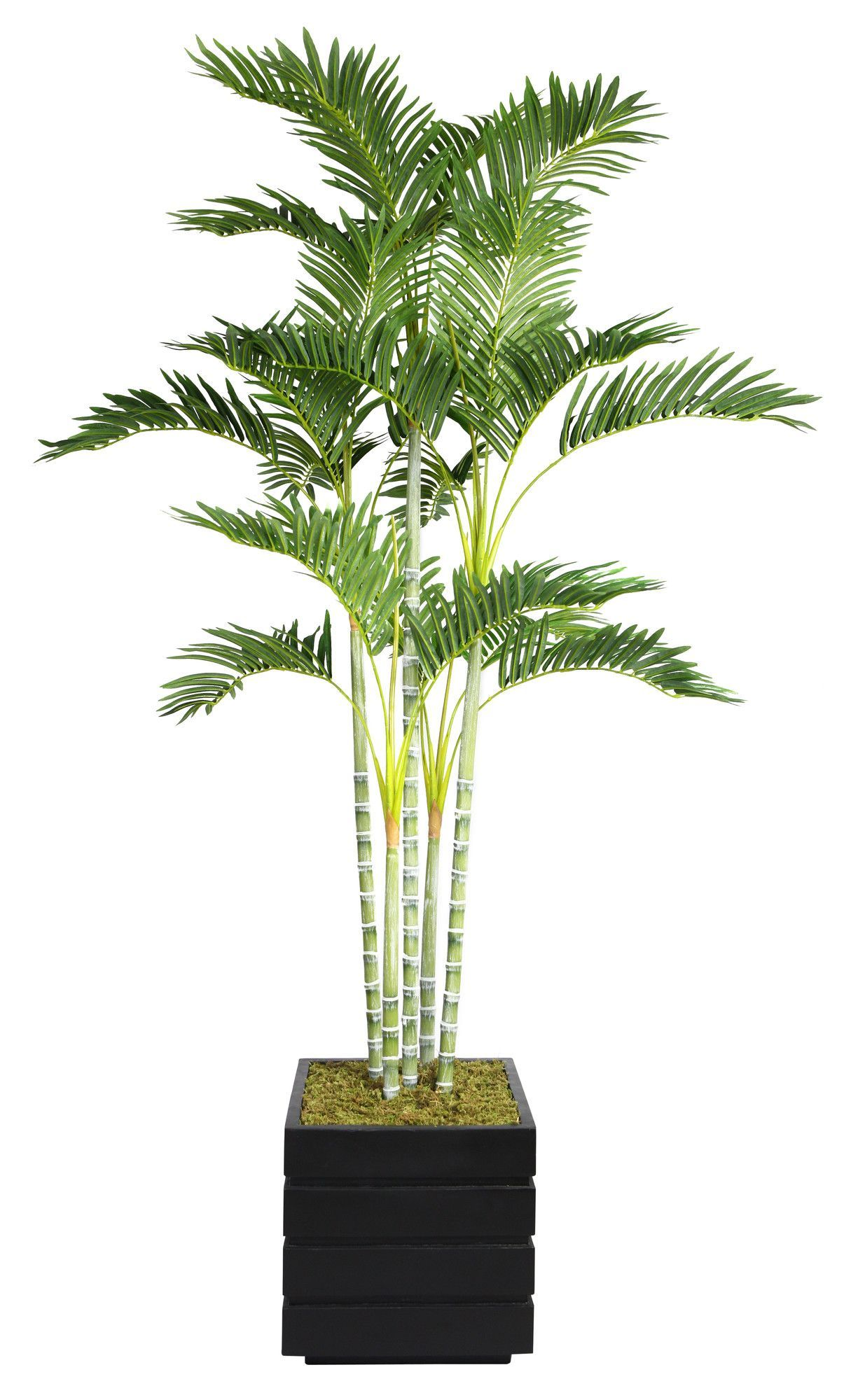Features No Need To Shop For A Planter Separately 400 x 300