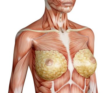 Female Chest Structure Google Search Anatomy Neck Drawing