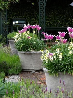 potted spring garden