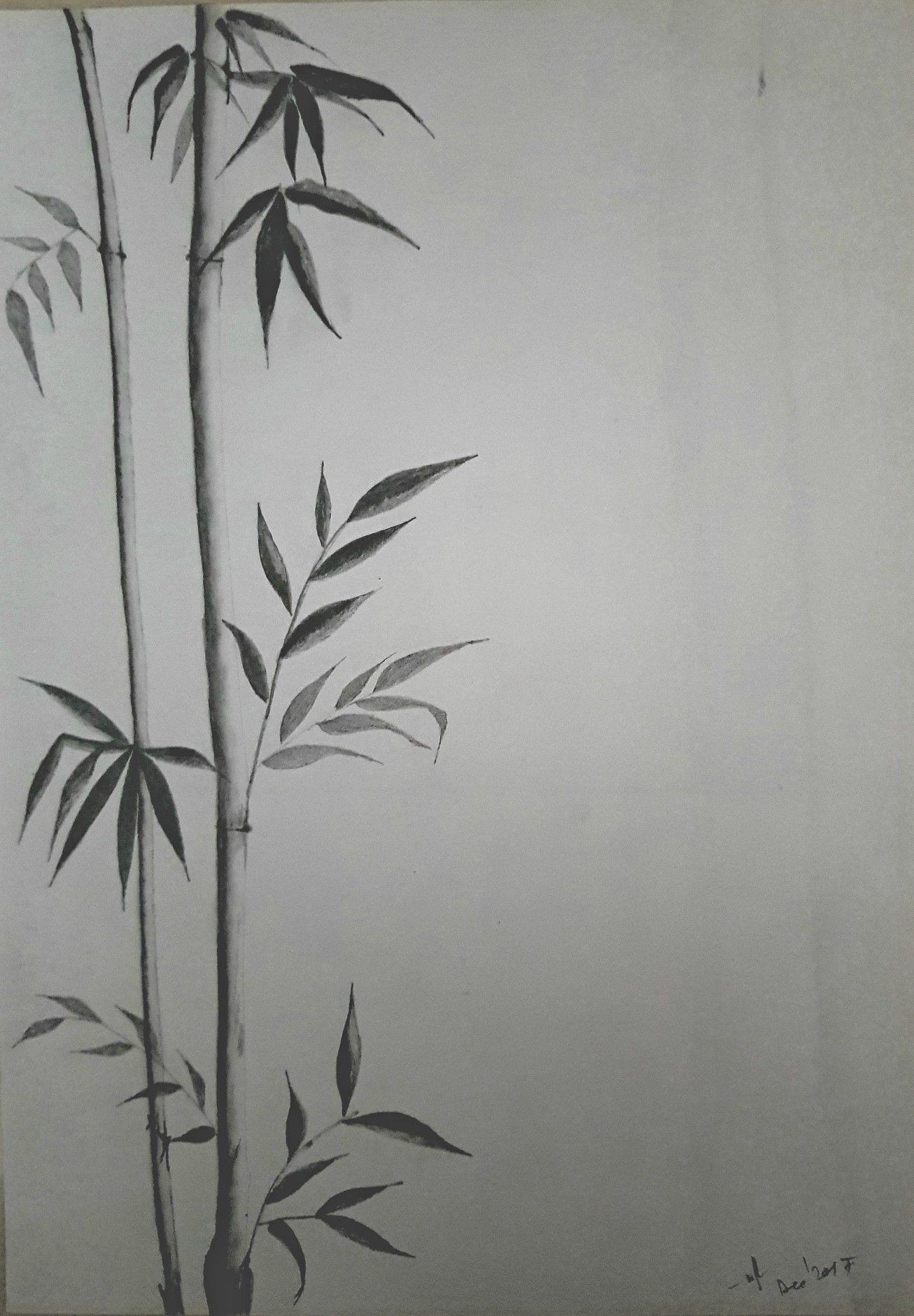 Bamboo plant pencil sketch my sketches pencil sketches pencil