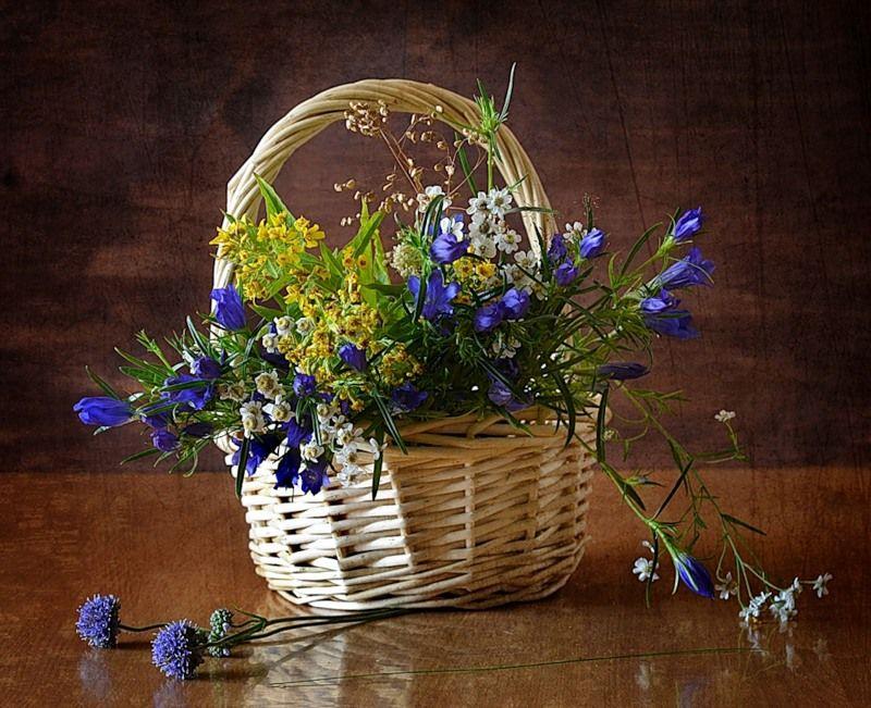 полевые цветы в корзинке картинка шатуш, фото которого