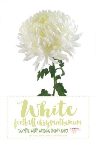 Essential white wedding flower guide names types pics white click here for 20 white wedding flowers httpconfettidaydreamstypes of white wedding flowers names mightylinksfo