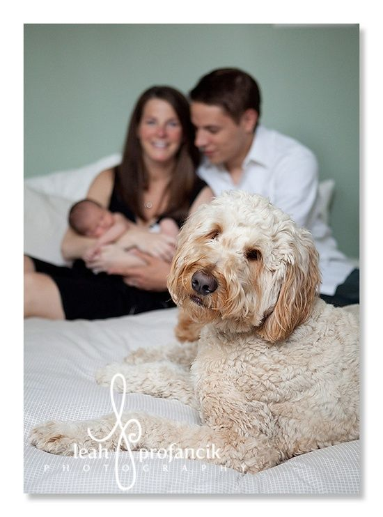 Dog Baby And Family