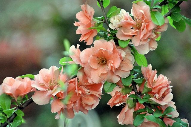 Pin by rose on flowers pinterest tao flora and flowers garden plants flower gardening beautiful flowers garden pretty flowers flower names tattoo flowers bougainvillea dream garden explore mightylinksfo