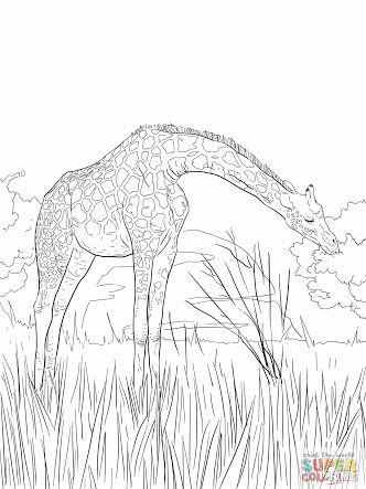 african coloring pages - Google Search | VBS Camp Kilimanjaro ...