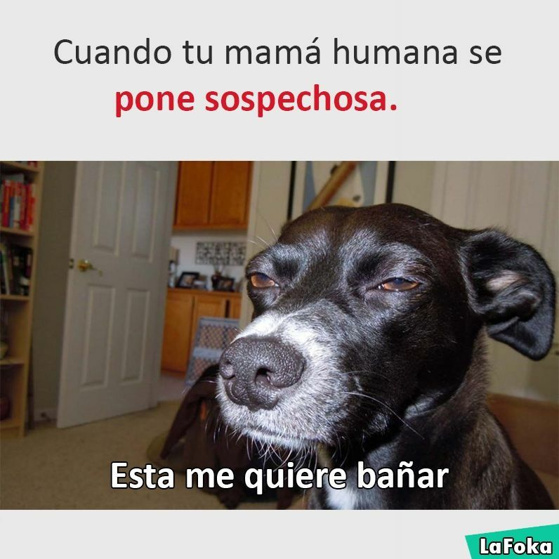 Mama Humana Sospechosa Memes Memes De Perros Chistosos Memes Espanol Graciosos