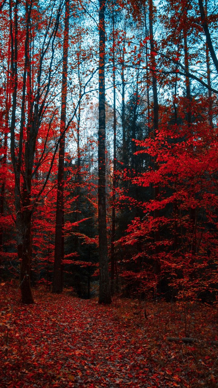 720x1280 Wallpaper autumn, forest, trees, foliage, autumn colors #autumnscenery