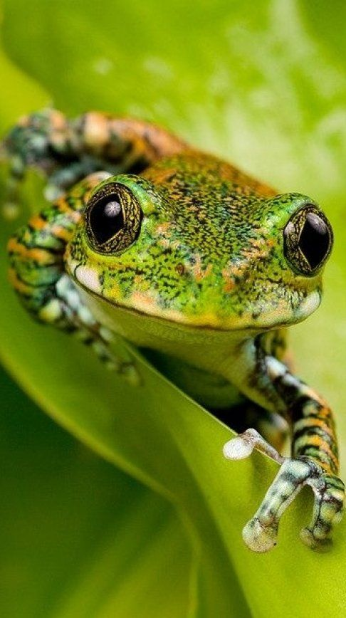 curious #green #frog is staring at you