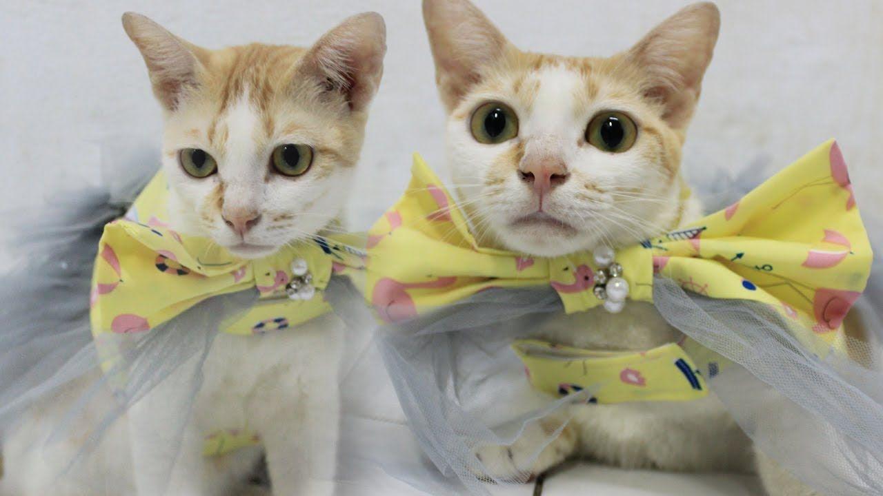 Cara Membuat Kalung Kucing Diy Cat S Bow Tie Collar Youtube In 2020 Cat Bow Cat Bow Tie Cat Diy