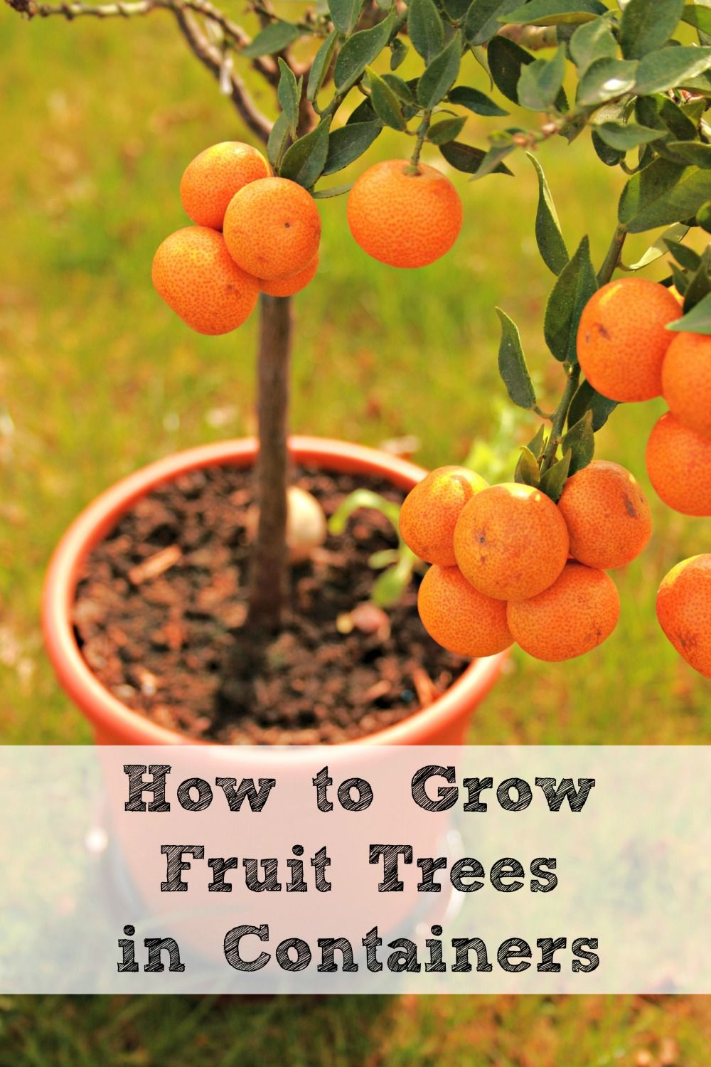 How To Grow Fruit Trees In Containers Http