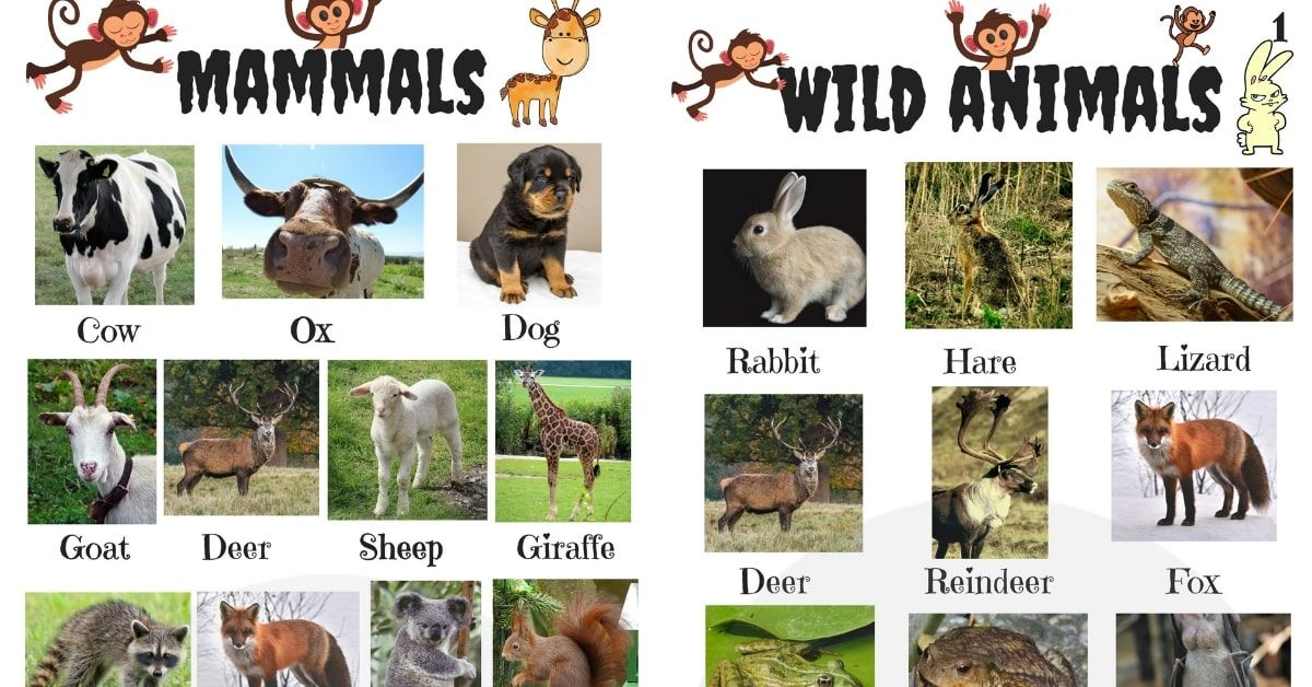 List Of Animals In English With Useful Animal Photos