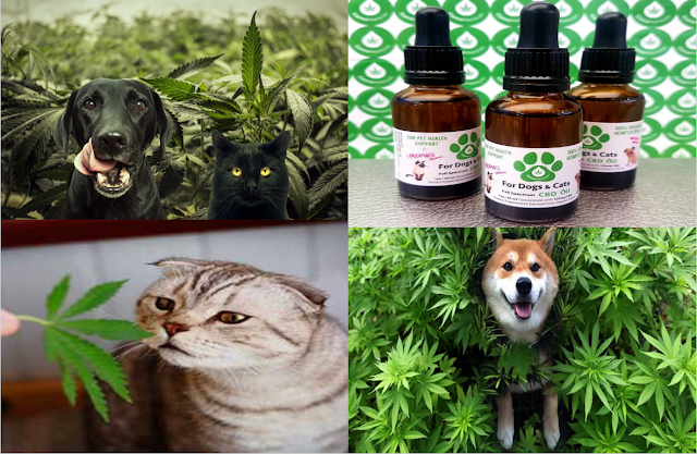 CBD for dogs and cats Dog cat, Dogs, Cats
