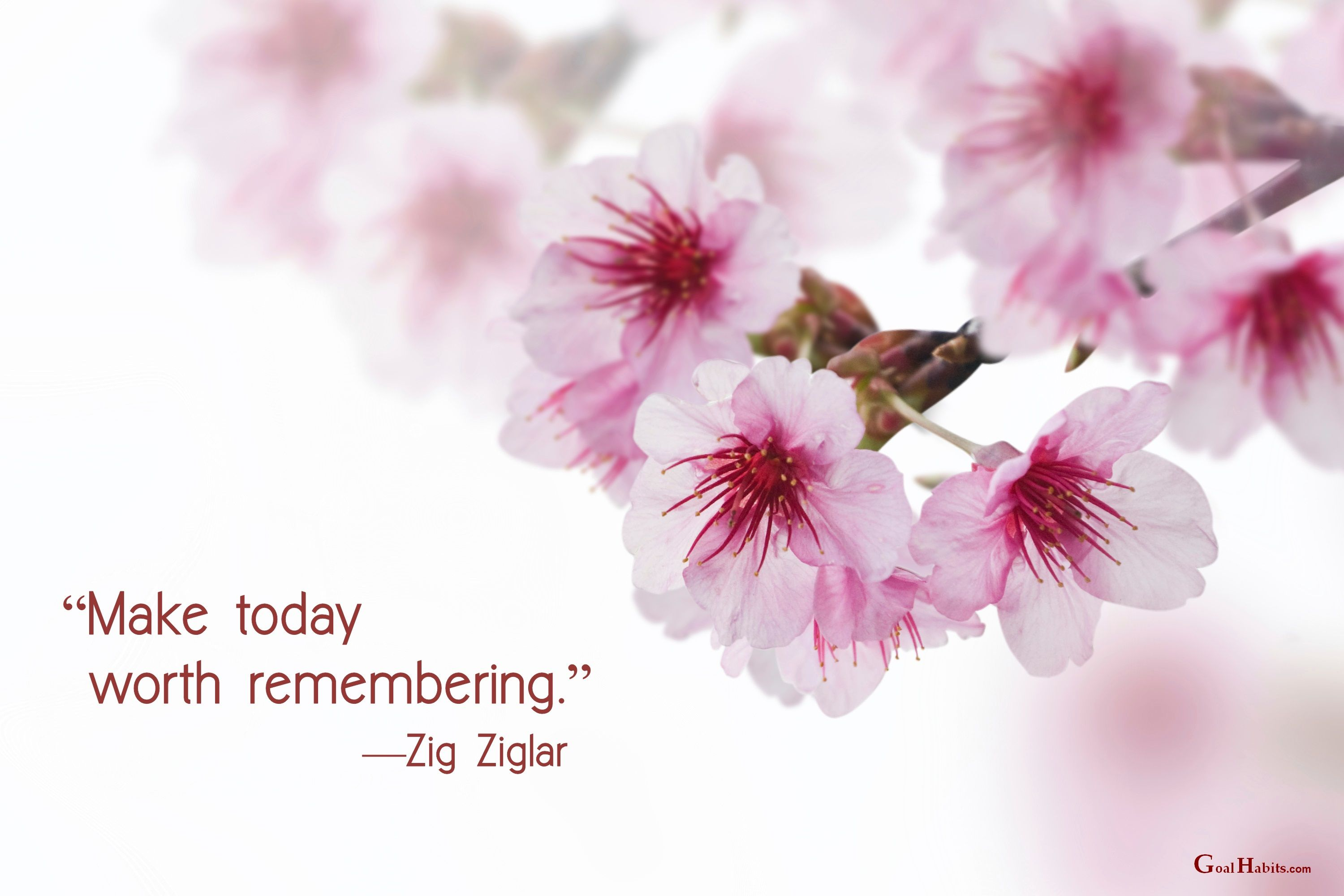 Image Result For Cherry Blossom Quote