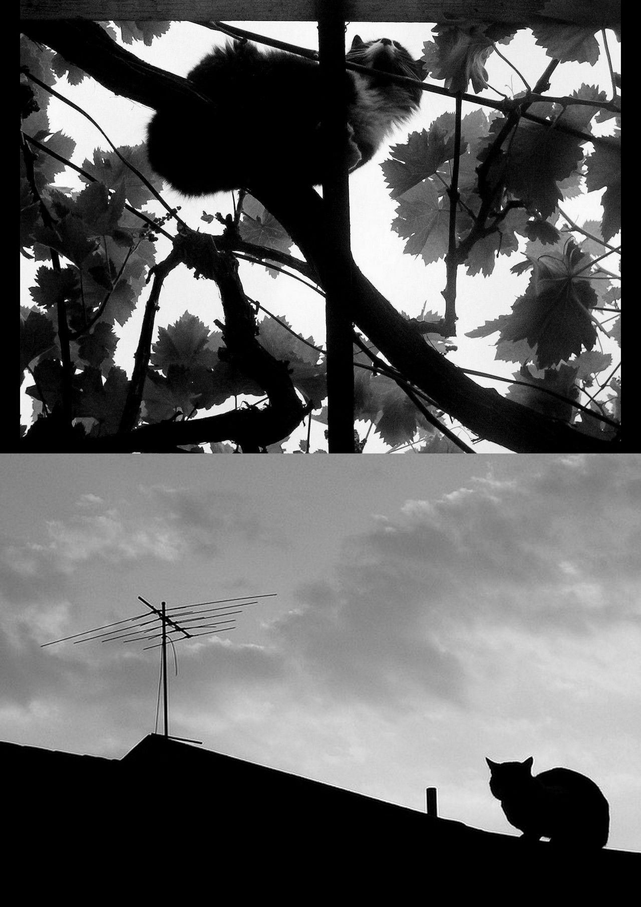 Gatos y alturas, por Jo-Paz