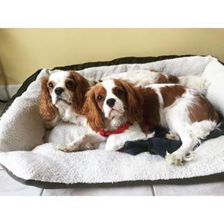 Jake & Louie ♥