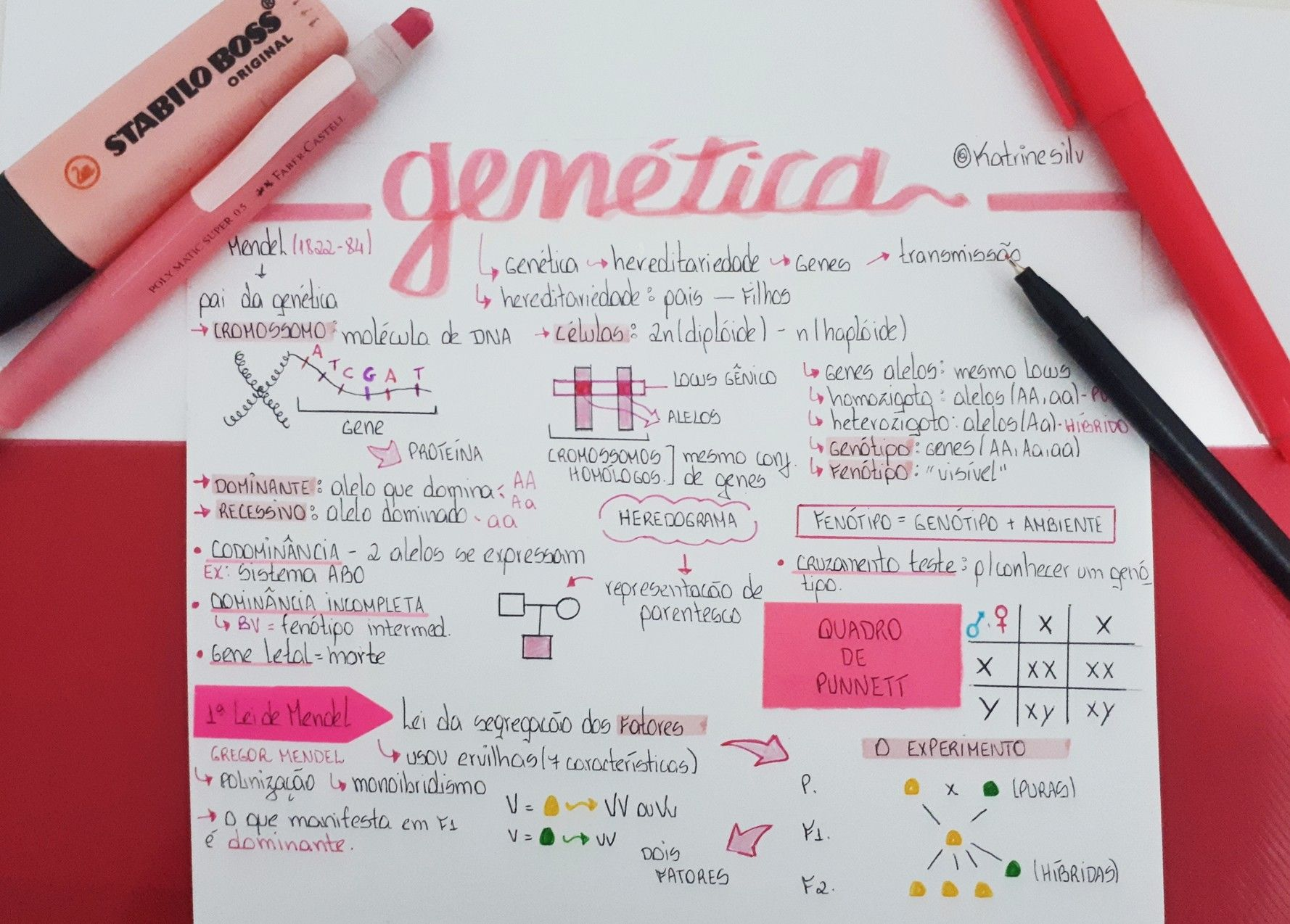 Pin De Ariana Velasquez Em Notes Leis De Mendel 1 Lei De Mendel