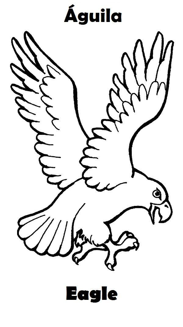 Aguila-colorear-ingles-espanol.jpg (600×1072) | ingles prepa | Pinterest