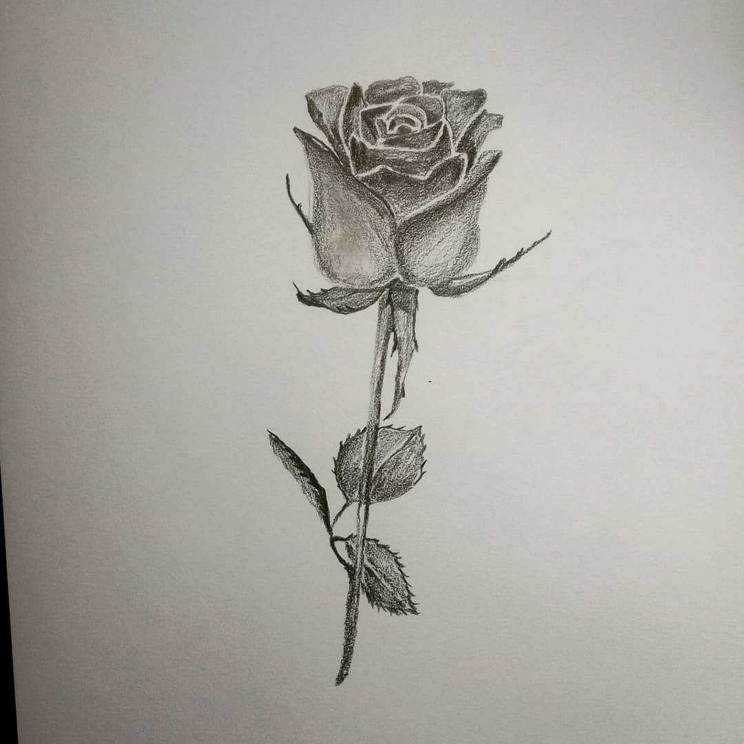 Eine Rose Fur Dich وردة لك ورد وردة ازهار ورود رسوماتي رسم رسومات رصاص رسومات رسمات فنان فن ابيض ا Dreamcatcher Tattoo Dream Catcher Tattoos