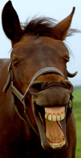 Give Your Horse Something To Smile About