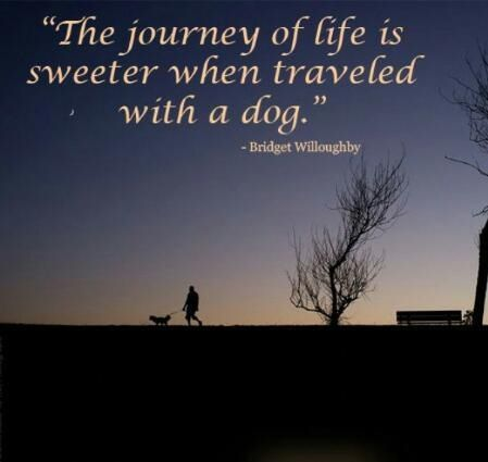 The Journey Is Best When Traveled With Dogs