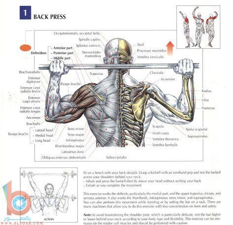 صور لتمارين عضلات الكتفين والظهر