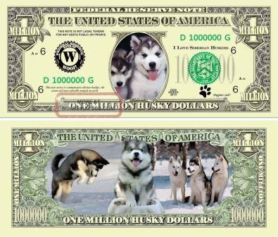 How Much Does A Miniature Siberian Husky Puppy Cost Husky Puppy