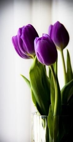 5 Types Of Flowers And What They Say About Your Relationship - All About Flowers – Our Blog | Flora2000.com