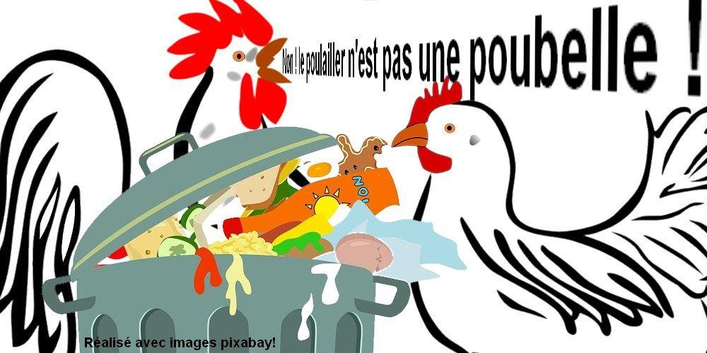 Dessin De Poulailler dessin - non le poulailler n'est pas une poubelle | poule