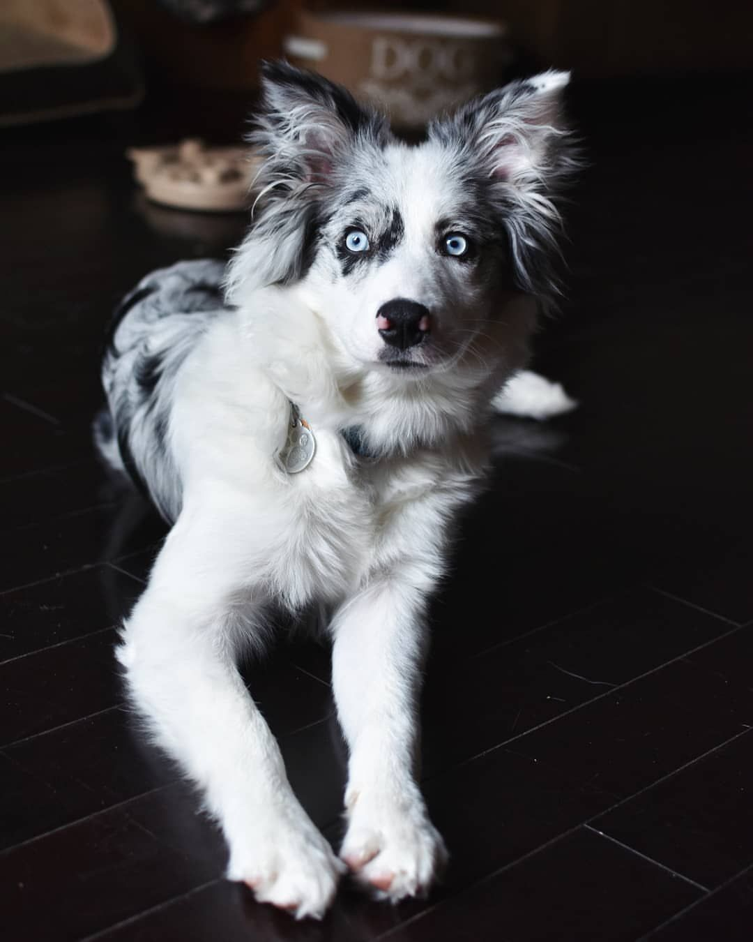 In Love With Border Collie On Instagram Feel Free To Express