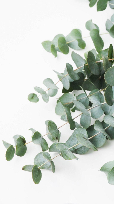 Eukalyptus Aquarell und Strichzeichnung Druck – Malerei Kunst – # Blumen Rosen …