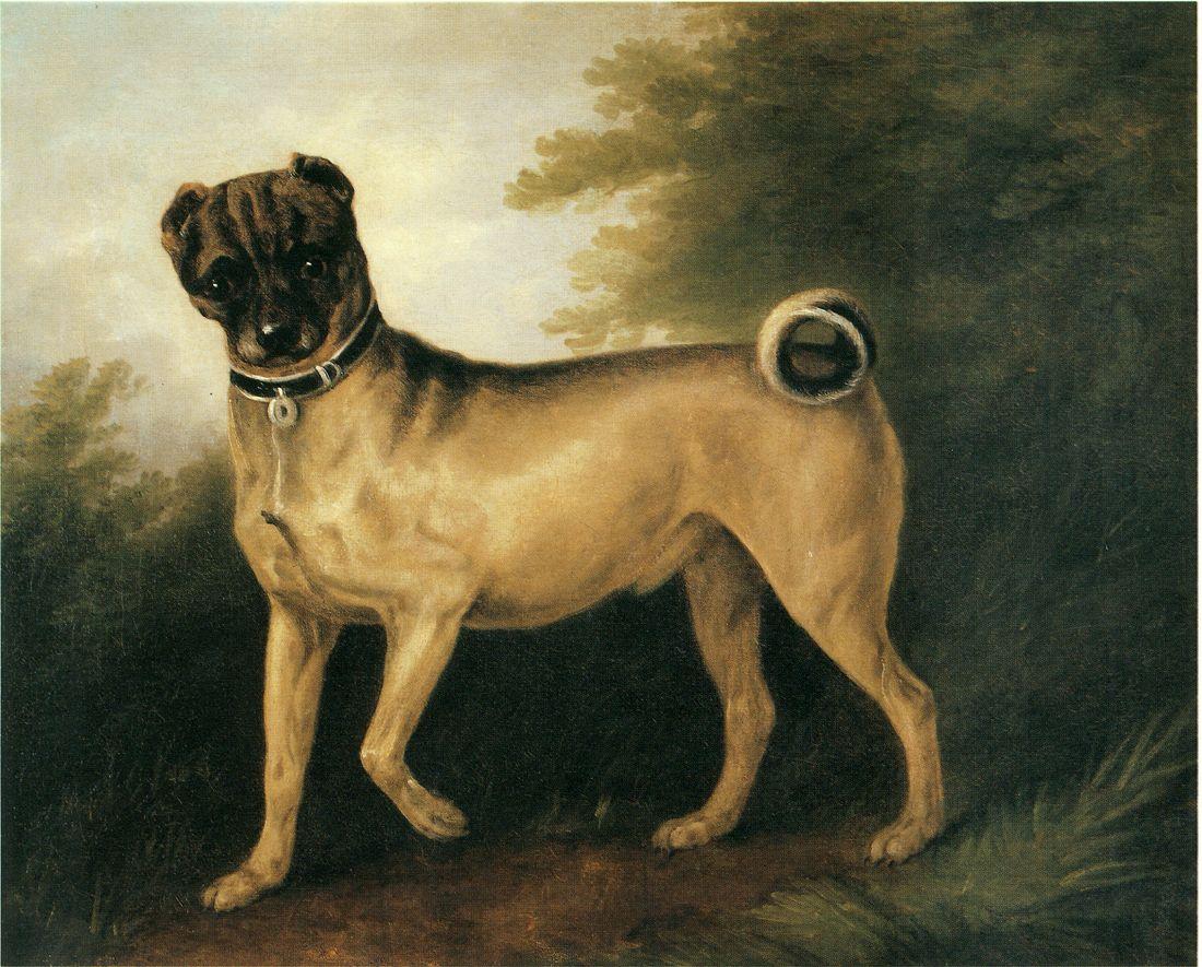 Pug In Landscape Dogs Pets Pug Dog