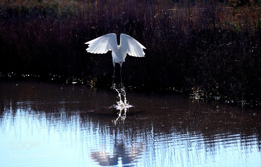 ..... e volar via by AngeloBalange