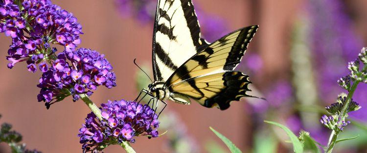 Top 10 Plants for Attracting Butterflies to Your Garden in ...