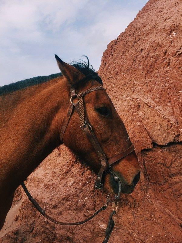 I Chose To Do A Three Hour Horse Route Inside The Marth